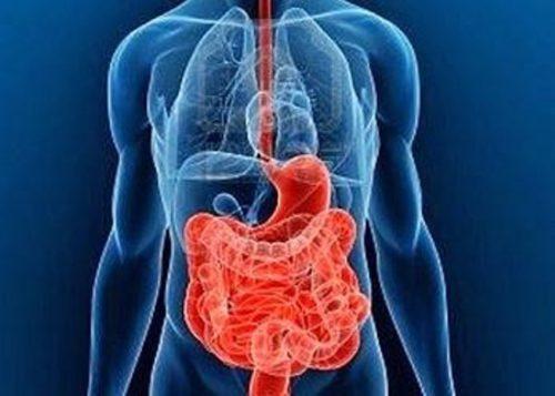 intestinosbisbalg